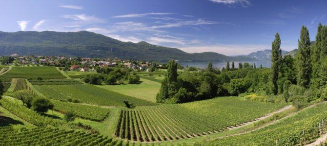 France's Best Wine Regions
