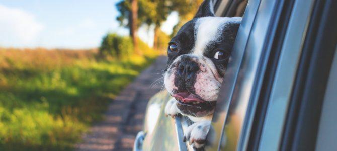 The cost of traveling with your dog