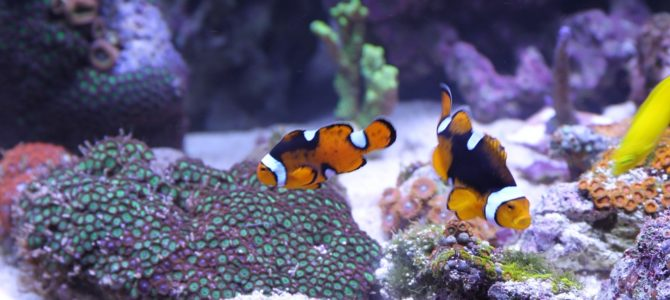 How to Care Properly for Your Fish Tank While on a Trip