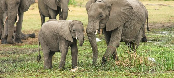 Fascinating Animals You Can See on an African Safari